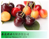 100% Natural Acerola Cherry Extract/ Acerola Cherry Extract Powder/ Organic Acerola Powder