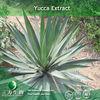 Yucca Extract powder (30% sarsaponin) in 3W Manufacturer