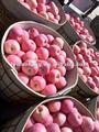 frutafresca los precios de mercado de apple con buena forma