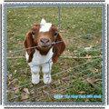 Le ranch et ferme d'élevage clôture( isogarantie& bv,& usine ce)