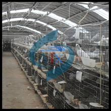 Paloma de carreras para la jaula de cría de paloma caliente vender 0086-18237112108