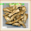 Competitive price pure angelica p.e
