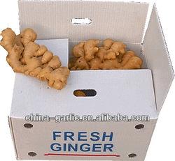 Buyer of Ginger (new season)