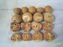 Betel Nut Whole/ Split Areca Nut/ Fresh Frozen Betel Nut