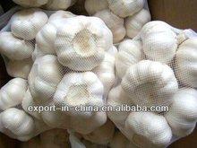 fresh normal white Garlic (2013 new crop 5.5cm)