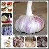 wholesale garlic products fresh fruit import export