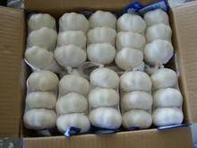 new nature white fresh garlic