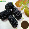High Quality Mulberry Extract Powder Mulberry Extract Skin