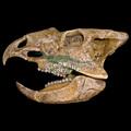 De tamaño natural de fibra de vidrio animales cabezas del cráneo de la decoración