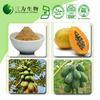 Botanical Extract CAS No.9001-73-4 Papaya Extract Papain Powder