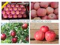 manzana fresca de fuji los nombres de todas las frutas