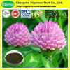 100% Natural Red Clover Extract/Red Clover Extract powder/red clover extract :formononetin