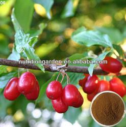 Asiatic Comelian Cherry Fruit P.E(5:1)