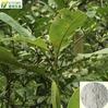 100% Natura Magnolol Magnolia Bark Extract Magnoliae Officinalis L