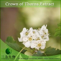 High quality flower extract of crown of thorns with low price