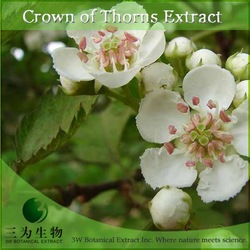 Hot Selling Pure Crown of thorns Powder - Made in China
