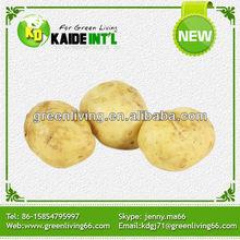 La venta de semilla de papa holanda camisa corta de la patata ( la mejor calidad y precio )