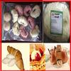 China Manufacturer! frozen bread dough