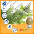Absinto puras planta extrato de ervas da medicina chinesa