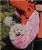 100PCS 2014 New Design Pet Dog Products Pink Canvas Pet Carrier Bag