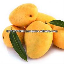 Kesar Mangos