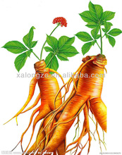 Best quality Panax Ginseng C.A.Mey extract with 80% Ginsenosides,giseng root extract,Panax Ginseng extract