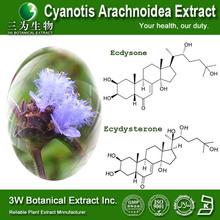 Pure Natural Cyanotis Arachnoidea Extract, Cyanotis Arachnoidea extract powder 4:1,10:,20:1