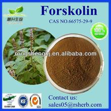 Natural Forskolin 98% Coleus Forskohlii Extract