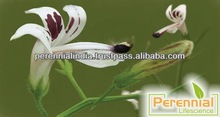 Supply Andrographis Paniculata Kalmegh Extract from India