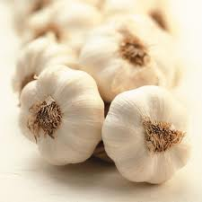 Fresh Garlic Supplier from India