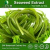 High Quality Fucoxanthin Seaweed Extract Agar/Seaweed Powder Food Grade Chinese Supplier
