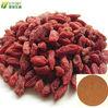 goji berry/barbury wolfberry fruit extract
