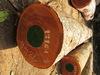 Sapelle Logs Timber (Sapeli,aboudikro),padauk logs and mahogany sawn timber