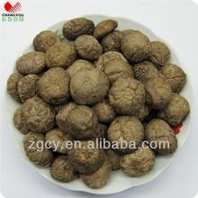 Changyou alimentos shiitake cultivo de cogumelos