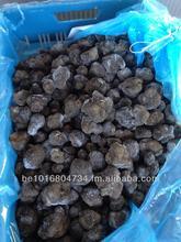 Summer truffles. Tuber aestivum. Tartufi neri estivi. zomer truffel. black truffle. Tuber uncinatum. Scorzone