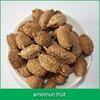amomun fruit seed