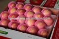 el mejor precio de manzana fuji de frutas de manzana orgánica