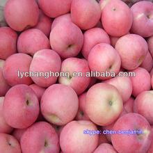China bulk red fresh Apple for sale