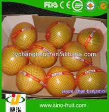 fresh quince fruit mandarin Orange for sale
