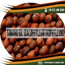 Tamanu oil (Calophyllum Inophyllum)