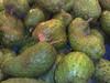 SUPER QUALITY SOURSOP FRUIT