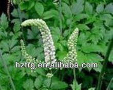 Hot sale black cohosh extract 2.5% triterpenoid
