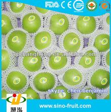 wholesale green apples /list of green fruit