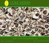 Moringa Plant seeds without shell