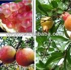 Purified natural Pomegranate,pharm.grade 65995-63-3 15% 20% HPLC Punicalagin