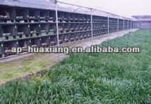 الصين مصنع عالي الجودة المستخدمة أقفاص الأرانب للبيع/ سلسلة ربط قفص الطيور سياج/ أقفاص الحيوانات الكبيرة للبيع