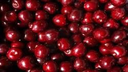 Fresh cherries from Bulgaria