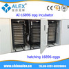 best price famous products made in germany AI-16896 eggs incubator ostrich chicks for sale