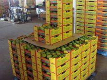 Australia Legal Pakistani Mango