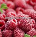 100% solúvel em água extratosvegetais fructus rubi